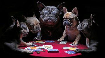 Perceptia selectiva in jocul de poker al incepatorilor